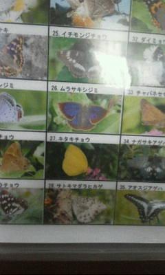 蓮田の蝶 下敷き.jpg